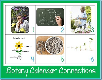 Calendar Connections Botany