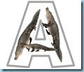 a alligator