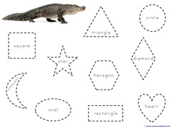 Alligator Shapes