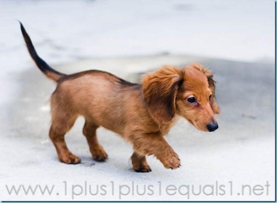 New Puppy-2580