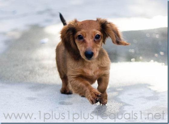 New Puppy-2625