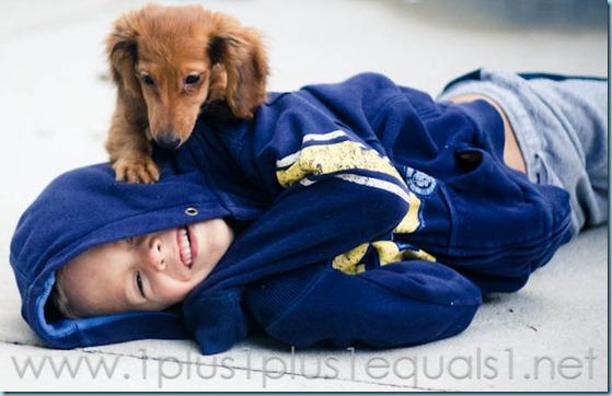 New Puppy-2642