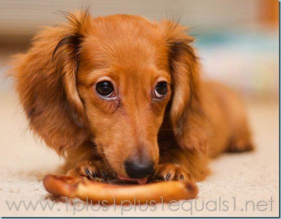 New Puppy-2674