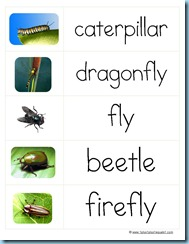 Word Cards Bugsc