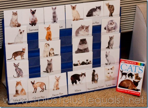 Cat Unit Study -5128