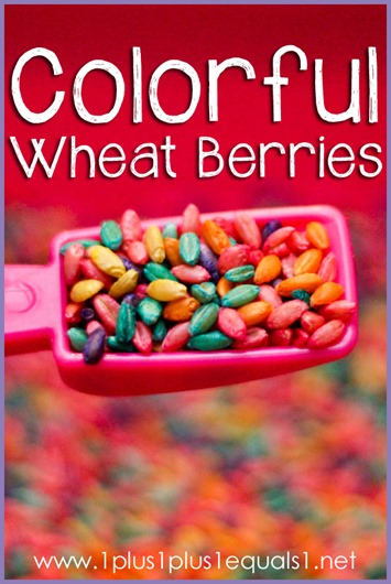 Colored Wheat Berries