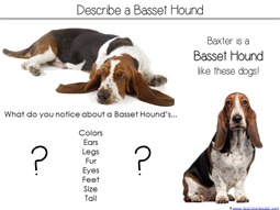 Describe a Basset Hound