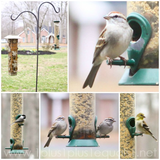 Lately in Our Life Birds