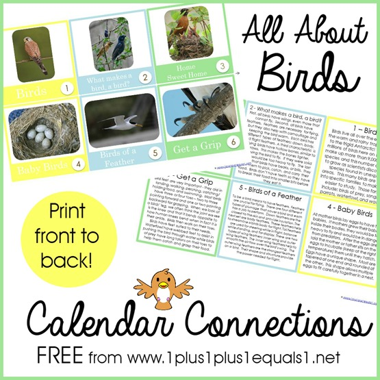 All About Birds Calendar Connections
