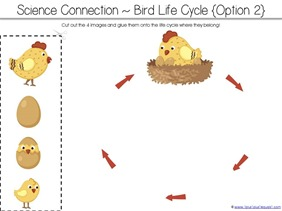 Counting is for the Birds Kindergarten Literature Unit Printables ...
