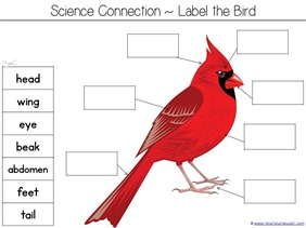 Label a Bird Printable