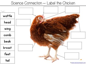 Label a Chicken