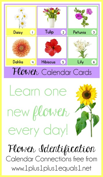 Flower Identification Calendar Connections