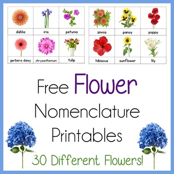 Flower Nomenclature Printables Montessori