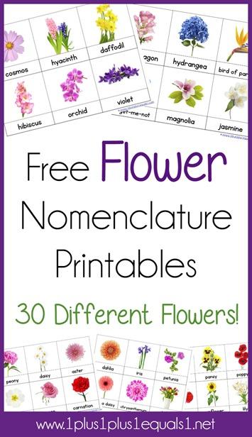 Flower Nomenclature Printables
