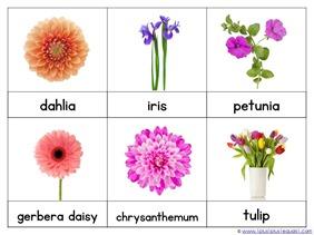 Flower Nomenclature