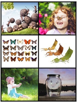 Printable Bug Photo Cards