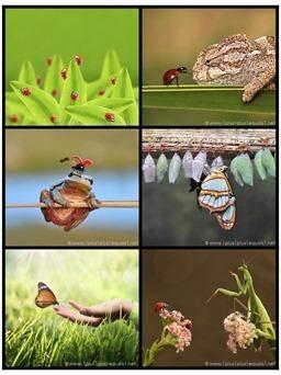 Printable Bug Photo Cards