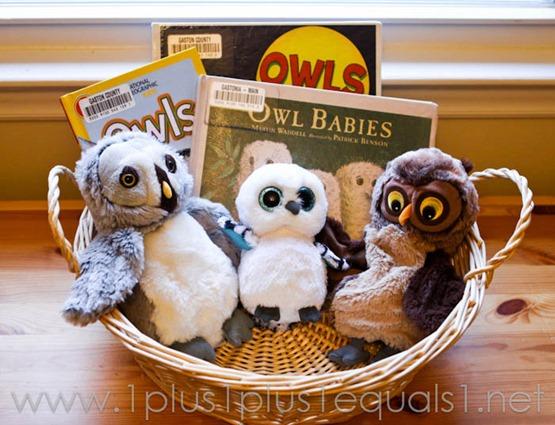 Owls -8422