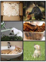 Cat Photo Printables