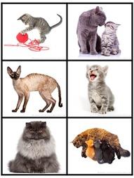 Cat Photo Printables