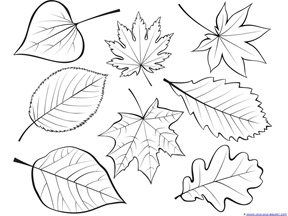 fall leaves and trees coloring 17 - Tree Leaves Coloring Page