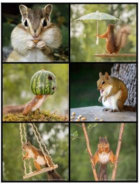 Fall Fun Story Starter Printable Photo Cards