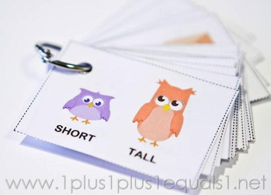 Owl Opposites -0476