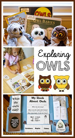 Owl Unit Study and Lapbook