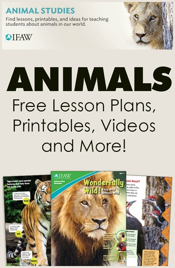 Learn About Animals with Free Resources from IFAW
