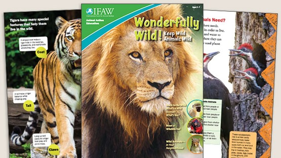 grades-k-2-keep-wild-animals-wild---student-magazine