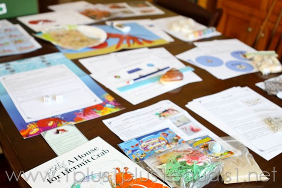 1st grade with ladybug archives page 3 of 6 1111 i sorted out all that was included in our a house for hermit crab box on our dining room table and it barely fit seriously so many wonderful activities fandeluxe Image collections