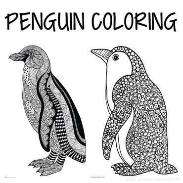 Penguin Coloring