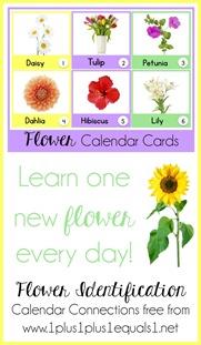 Flower Identification Calendar Connections