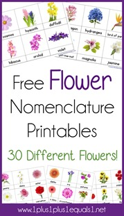 Flower Nomenclature Printables