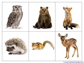 Forest Animals Printables (18)