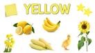 Color  (6)