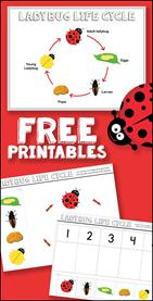 Free Ladybug Life Cycle Printables