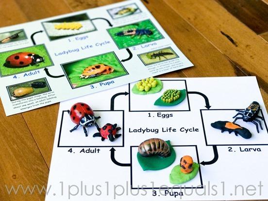 Ivy Kids Kits (2 of 4)