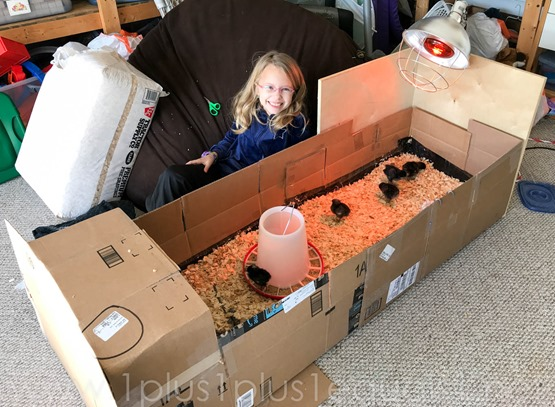 DIY Brooder Box for Chicks made from cardboard boxes