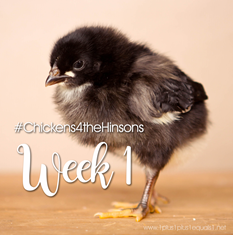 Chickens-4-the-Hinsons-Week-12