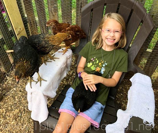 Chickens Week 8 9 (15 of 12)