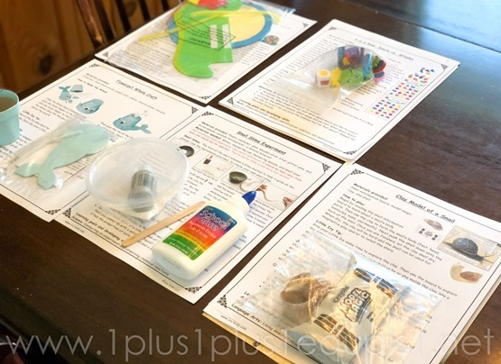 Ivy Kids Snail and Whal Kit (1 of 11)