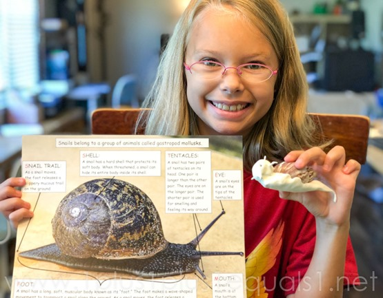 Ivy Kids Snail and Whal Kit (6 of 11)