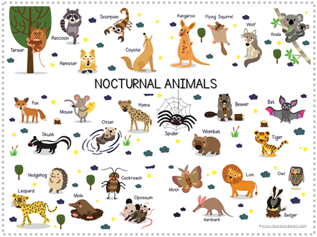 Nocturnal Animals Printables (2)