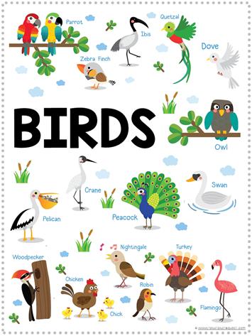 Bird Fun Pack Free Printables (2)