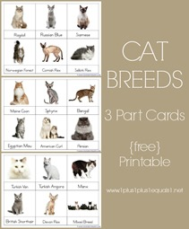 Cat Breed 3 Part Cards