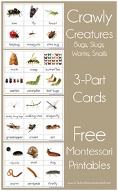 Montessori Nomenclature Printables 3 Part Cards Bugs and Creatures