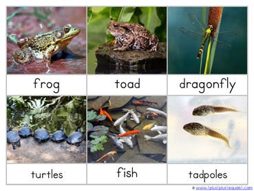 Pond Life Nomenclature Cards (2)