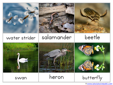Pond Life Nomenclature Cards (6)